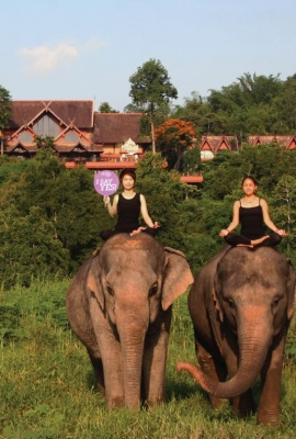 Anantara Yoga June 2015 Anantara Golden Triangle Elephant Camp & Resort Thailand.jpg